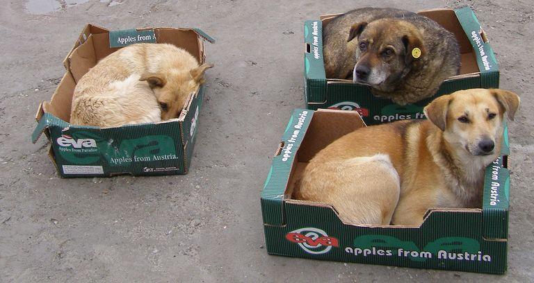 Si pana la urma nu se mai eutanasiaza cainii vagabonzi