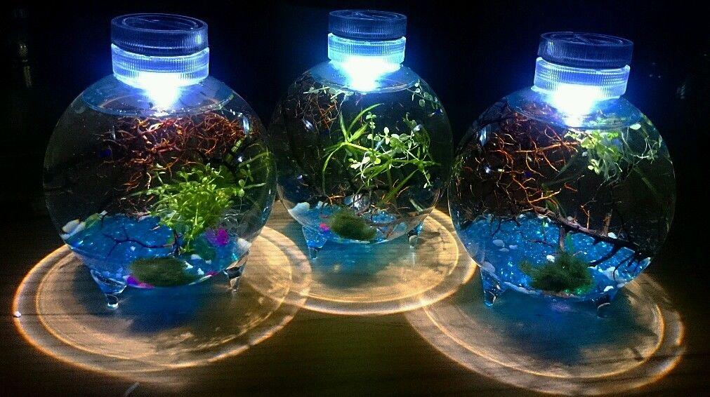 Cum să-ți faci mini ecosistem autosusținut într-un borcan (E mai mișto decât sună!)
